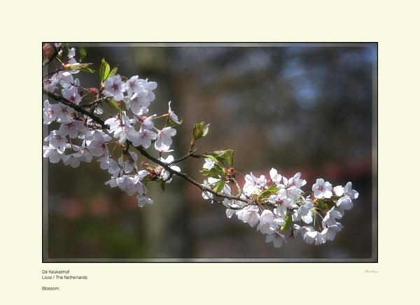 Blossom by Pentaphobian