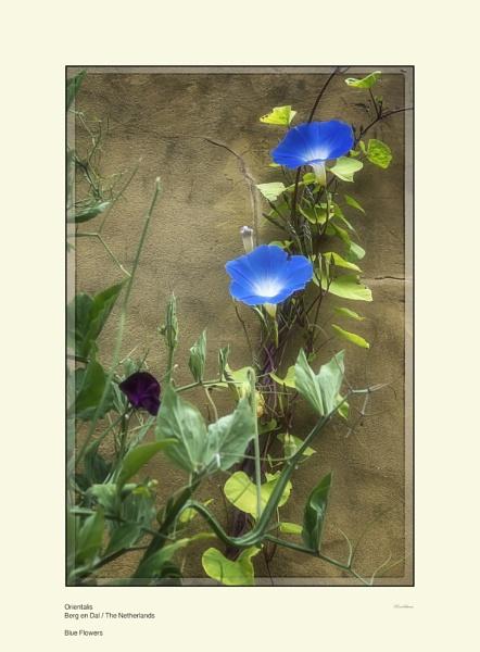 Blue Flowers by Pentaphobian