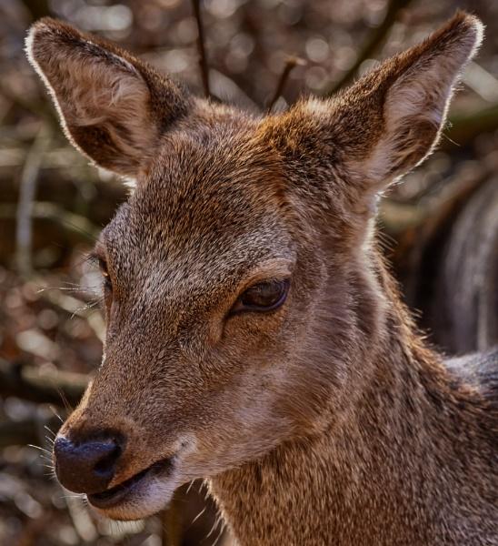 Deer Portrait by JJGEE
