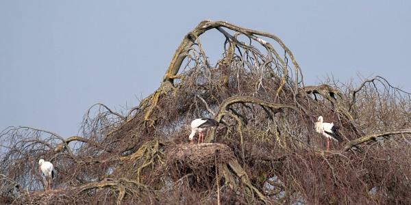 mummy tree by macdaniel