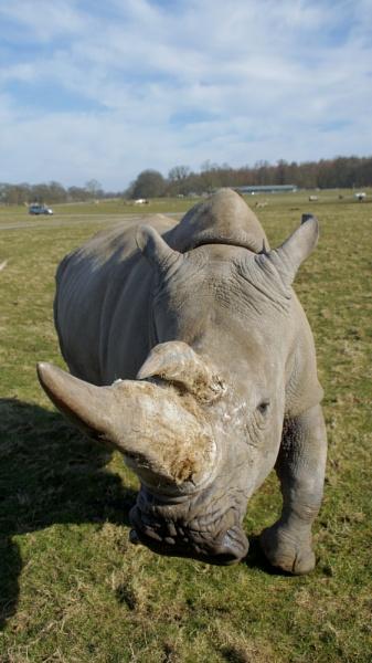 Rhino by TrevS