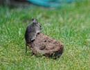 Little Mouse by leginR