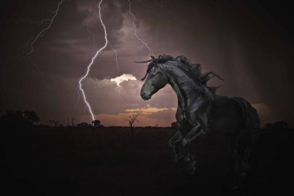 Friesan Storm by Msalicat