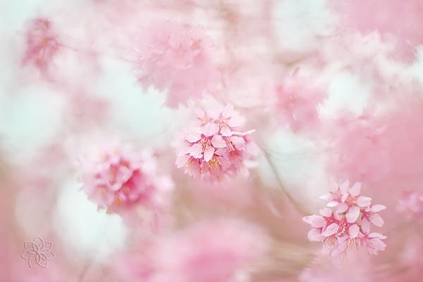 Gentle Spring by jackyp