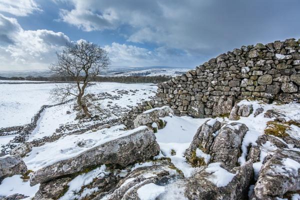 Snowy Tree by ade_mcfade