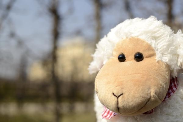 Spring sheep by FloKl