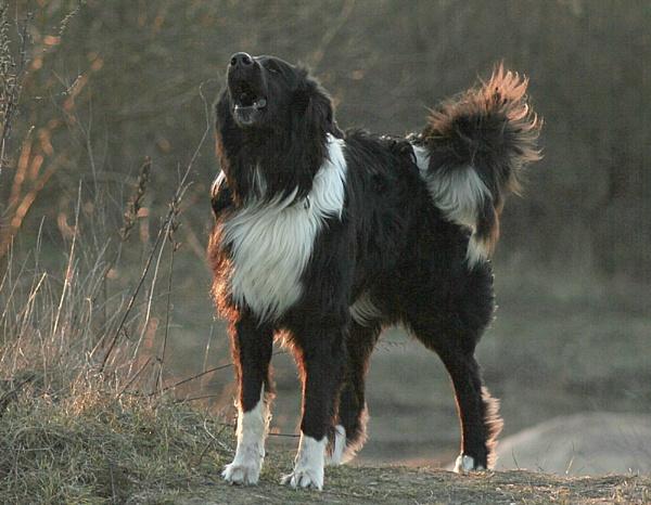 Dogs eyes by kazeva