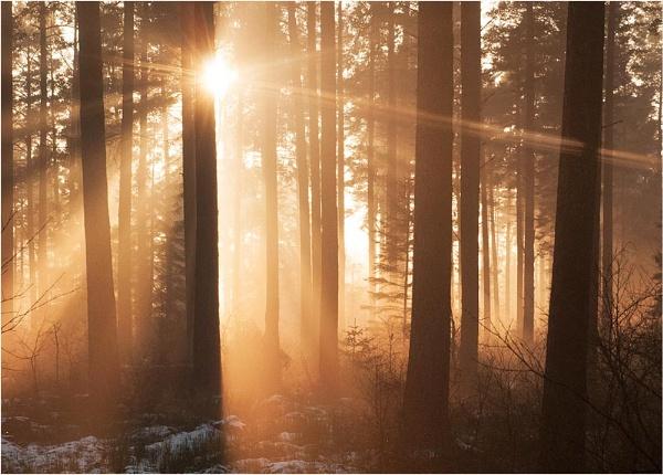 Winter Sun by MalcolmM
