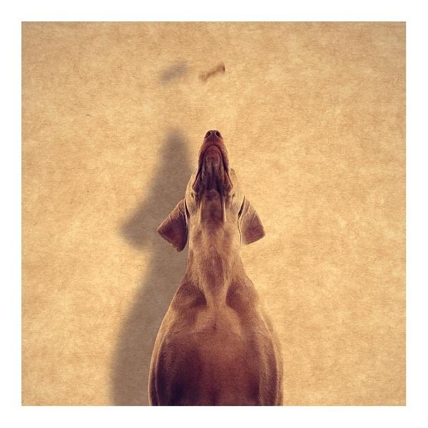 Bonio Jump by chrispethick