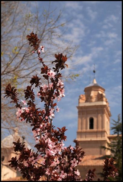 Spring in Oria by jdenman