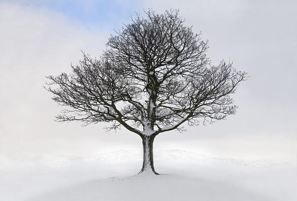 Winter Tree. by steebi
