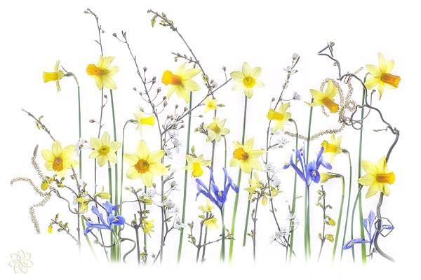 Spring Reverie by jackyp