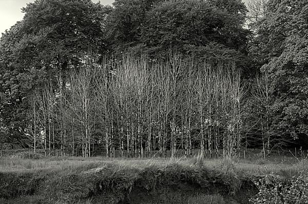 Tree screen by KenTaylor
