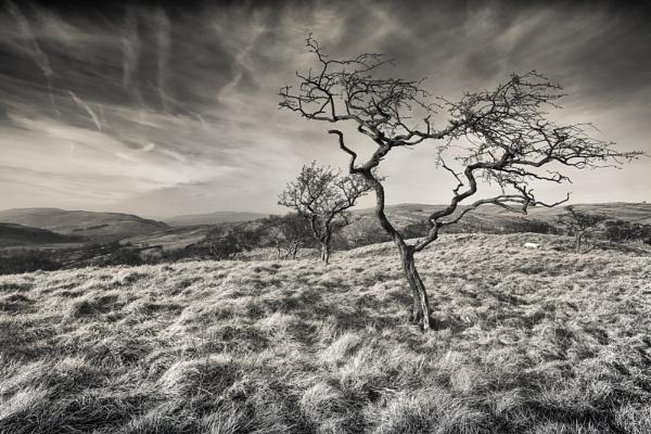 Thorny Sky by gerainte1