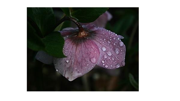 Raindrops keep falling on my head ...