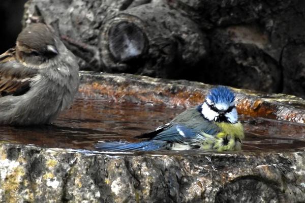 Bathtime by Crespo