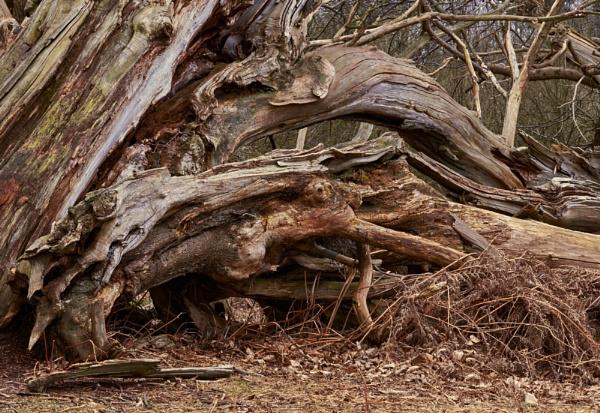 Fallen Trees by JJGEE