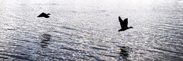 Flight by jonathanbp