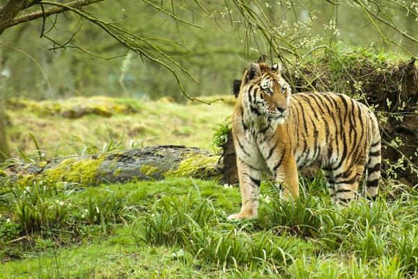 Turlough - Longleat Safari Park by editfmah