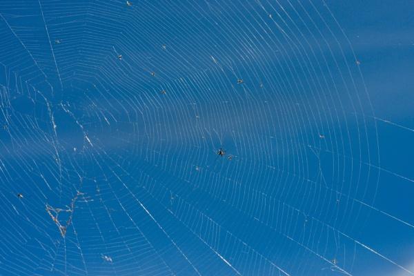 Spider Web by Ayoob