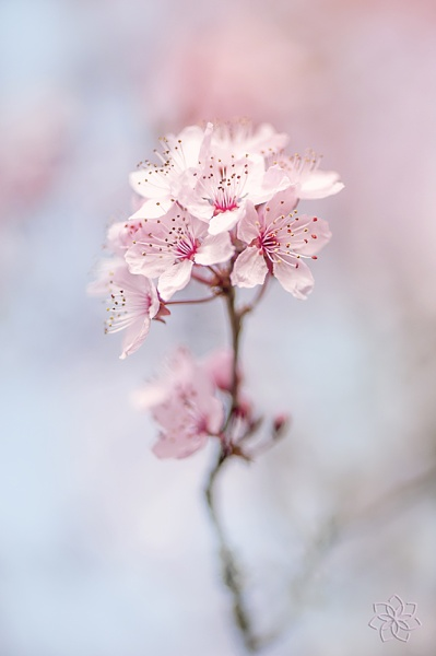 Easter Pink by jackyp