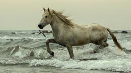sea horse ?