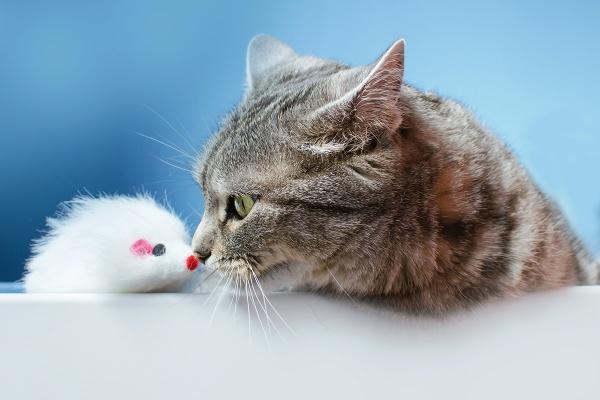 Eskimo kiss by duba