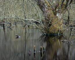 Swamp near Sutton, West Sussex
