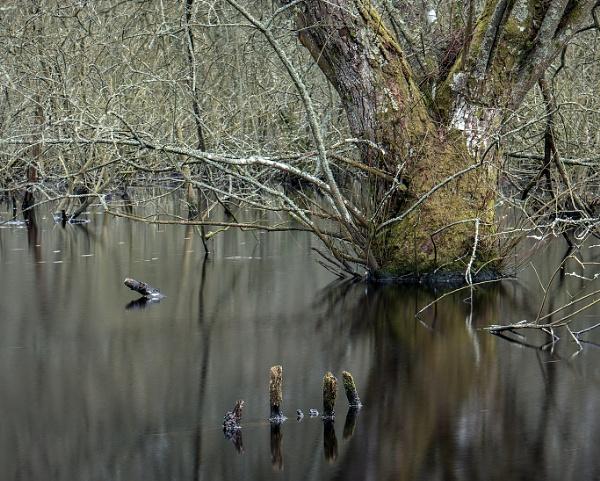 Swamp near Sutton, West Sussex by seandhlewis