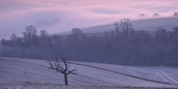 Pink Morning on Bury Hill