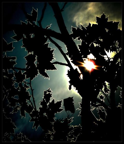 Back lit tree by Aldo Panzieri