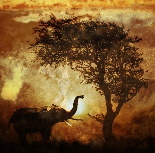 Elephant fantasy by aliciabeesley