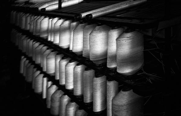 Cotton 1 by xwang