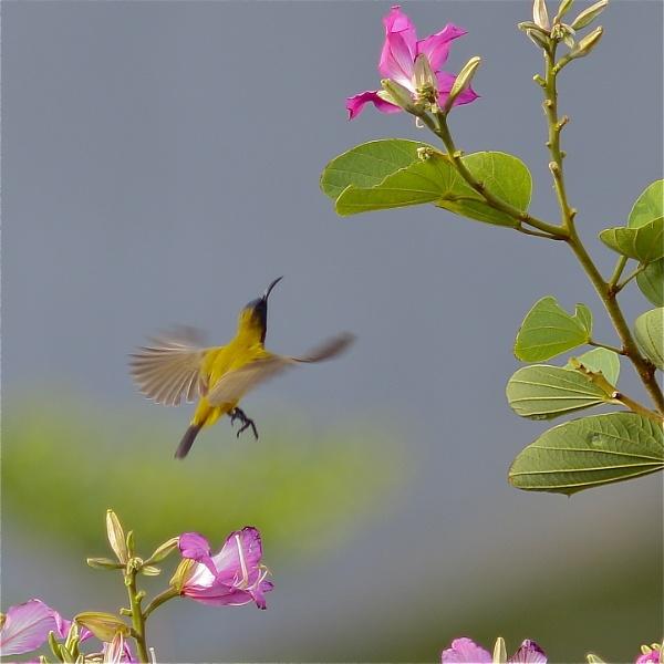 Colibri by WimpyIskandar