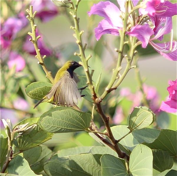 Colibri hovering [almost] by WimpyIskandar