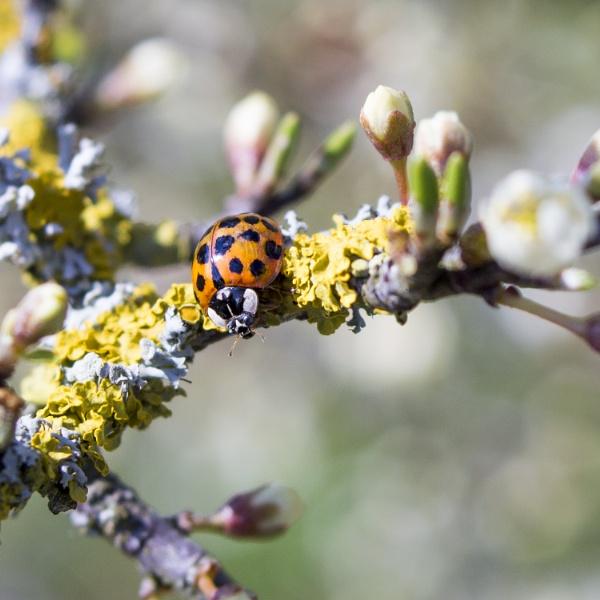 Ladybird by gowebgo