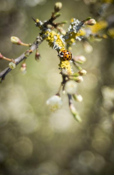 Ladybird 2 by gowebgo