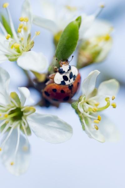 Ladybird 3 by gowebgo