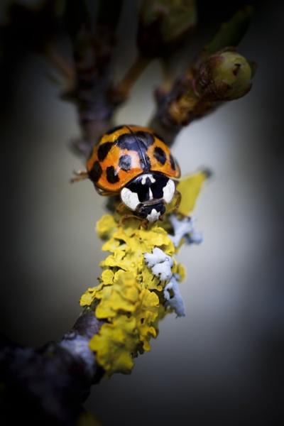 Ladybird 4 by gowebgo