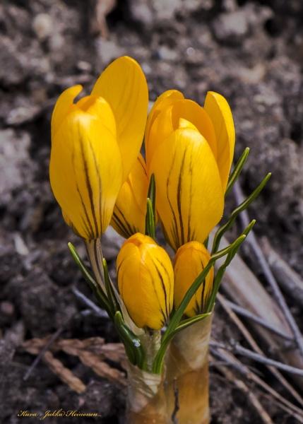 Spring macros. by kuvailija