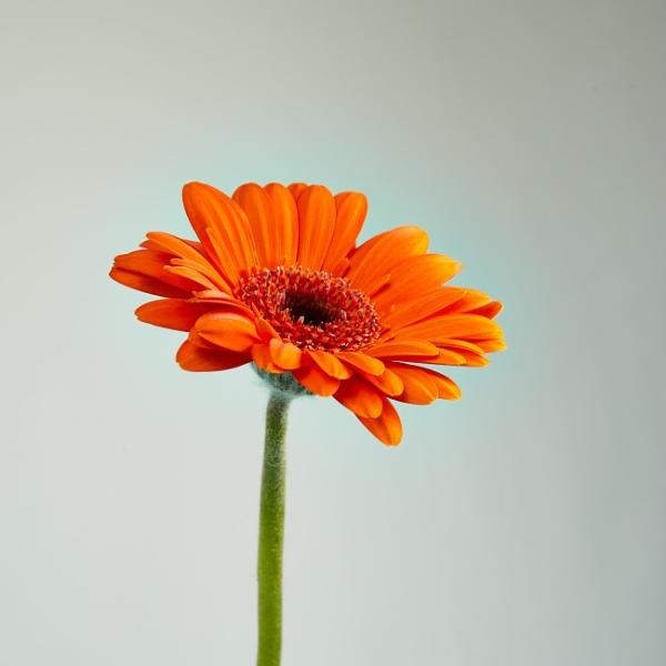Flower by eskimo