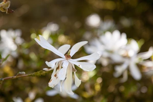 Spring by Akif
