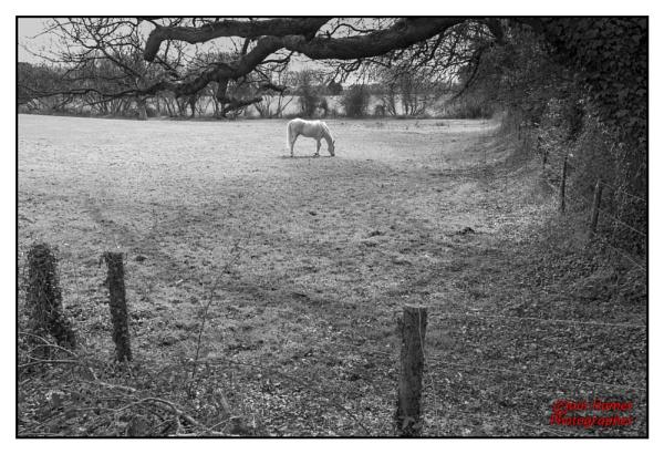 White Horse by IainHamer