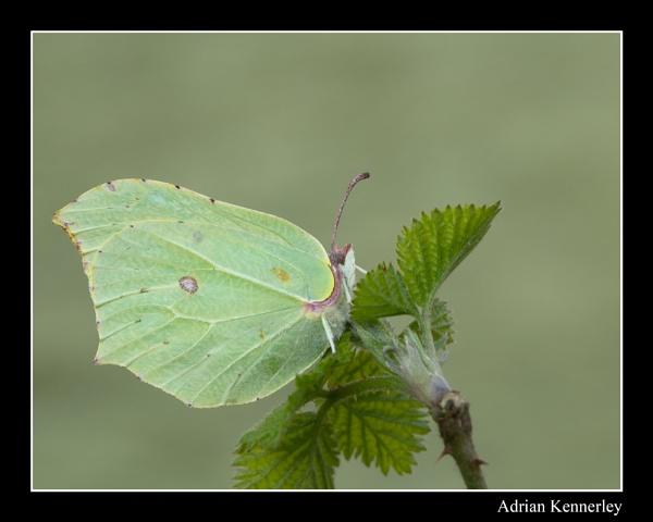 Butterflies 2015 No 1 by tomcat