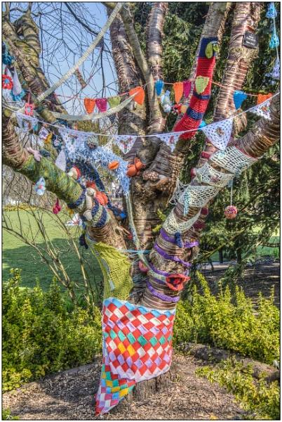 Wool Tree by TrevBatWCC