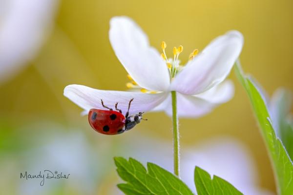 Spring Lady by MandyD