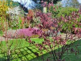 My Garden -this morning