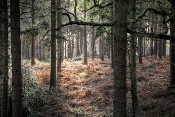 Woodland scene in Berkshire by Simon_Marlow