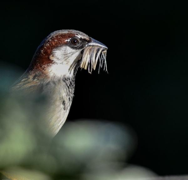 Nesting by jadus