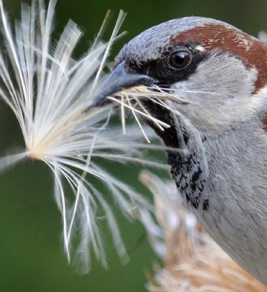 Nesting II by jadus